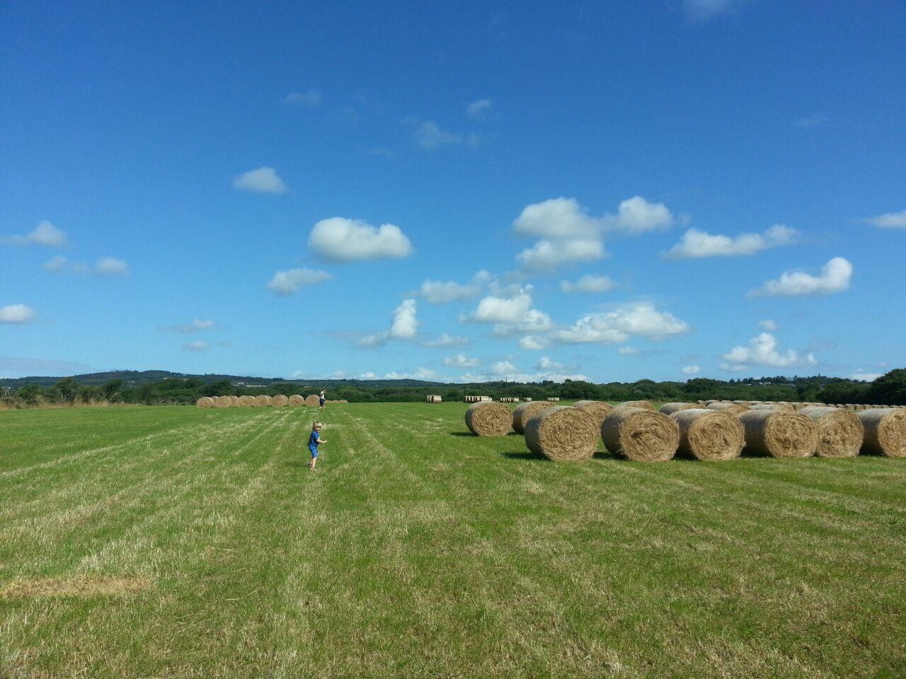 80 Acres Grassland - Gaynestown Stud Wexford