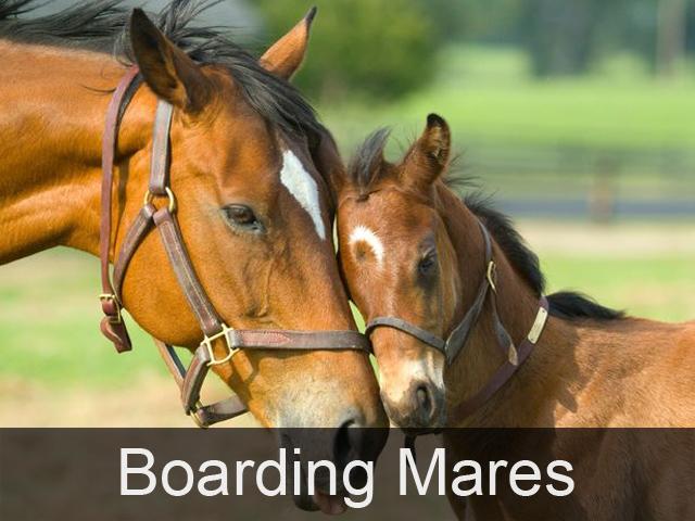 Boarding Mares at Gaynestown Stud Wexford