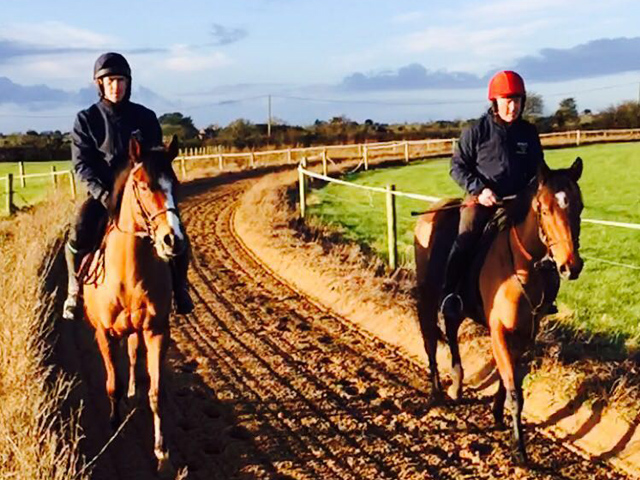 Services at Gaynestown Stud - National Hunt & P2P Training