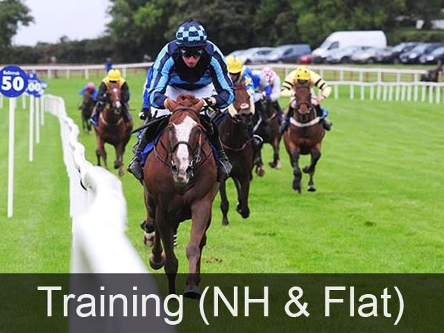 Horse Training at Gaynestown Stud Wexford with Jonathan Fogarty